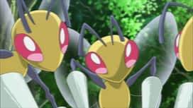 Pokemon : S19E11 Sur les ailes du vent !