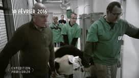 Expédition Pairi Daiza : 1 - Suivez l'évolution du bébé panda