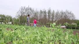 Szuperzöld : Szuperzöld 2020-06-07