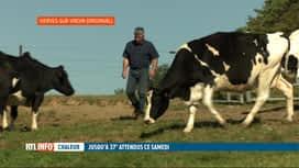RTL INFO 13H : Les agriculteurs adaptent de plus en plus leurs cultures à la séche...