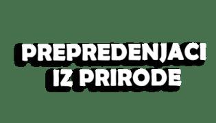 Program - logo - 17521