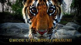 Uhode u tigrovoj prašumi en replay