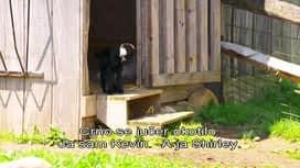 Lovci na nekretnine : Epizoda 4 / Sezona 6