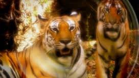 Uhode u tigrovoj prašumi : Epizoda 1 / Sezona 1