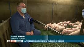 RTL INFO 13H : La peste porcine africaine est officiellement éradiquée en Belgique