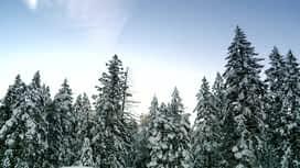 Ljudi iz aljaške divljine : Epizoda 1 / Sezona 4
