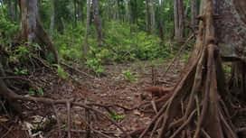 Škola orangutana : Epizoda 7