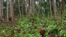 Škola orangutana : Epizoda 10