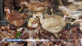 Coûte que coûte : Le poulet dans tous ses états