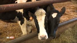 RTL INFO 19H : Un producteur de lait de Ham-sur-Heure dénonce les nuisances d'une...