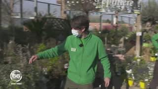 Plantes, salons de jardin, barbecues : vive le printemps !