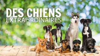 Bande-annonce : Des chiens extraordinaires