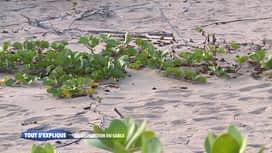 Tout s'explique : La disparition du sable
