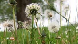 RTL INFO 19H : Concentrations de pollen dans l'air 3 fois supérieures à la moyenne