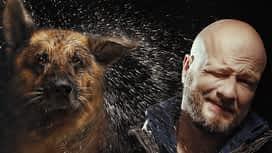 Egyik kutya, a másik eb en replay