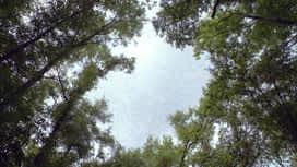 Under the Dome : S03E08 Résistance