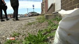 RTL INFO 13H : Mauvaises herbes sur le trottoir : gare aux amendes en région carolo