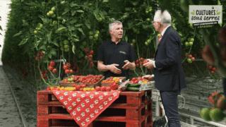 D'où vient le goût des tomates ?