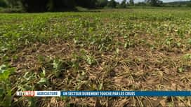 RTL INFO 13H : Inondations: dégâts dans de nombreux champs, exemple à Grez-Doiceau
