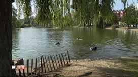 RTL INFO 19H : Grande opération de nettoyage des étangs d'Ixelles