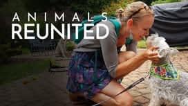 Animals reunited en replay