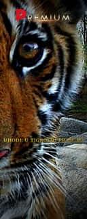 Uhode u tigrovoj prašumi