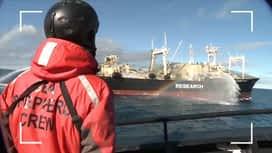 Enquête exclusive : L'association Sea Sheperd à la poursuite des chasseurs de baleines, les nouveaux scandales de la maltraitance animale dans Enquête Exclusive dimanche à 21:00 sur M6