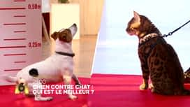 Chien contre chat : qui est le meilleur ? : Chien Contre Chat , qui sera le meilleur ? Mac Lesggy et Faustine Bollaert vous donne rendez-vous dimanche à 21:00