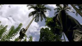 À l'état sauvage : Mike Horn escalade un cocotier !