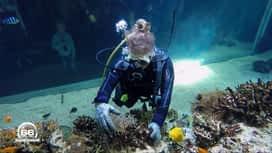 66 Minutes : Grand format : Au coeur du plus grand aquarium de France