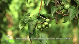 E = M6 spécial Nutrition : Fruits et légumes: Pourquoi crée-t-on encore de nouvelles variétés ?