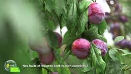 E = M6 spécial Nutrition : Nos fruits et légumes sont-ils bien contrôlés ?
